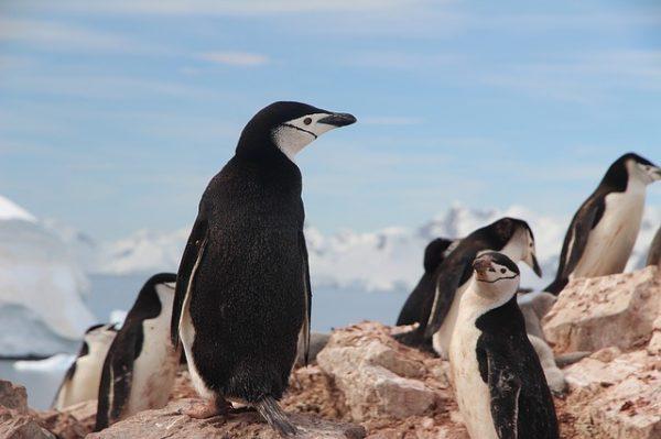 high temperature readings in Antarctic Region