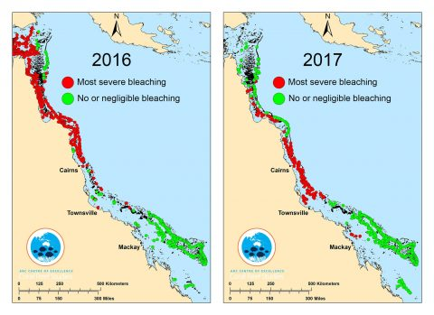 Great Barrier Reef Bleaching Map