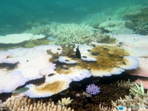 Great Barrier Reef Underwater Bleaching