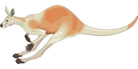 kangaroo movement illustration