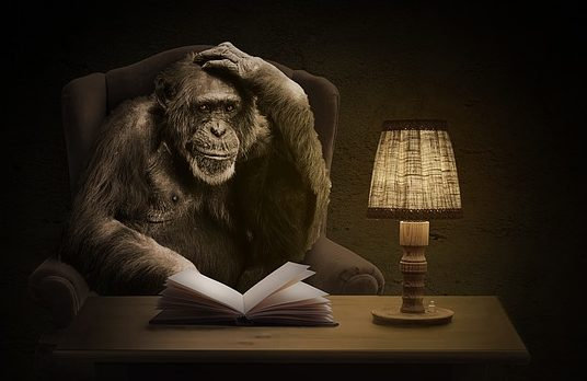The evolution of man, primate; chimp reading a book illustration