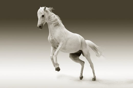 white horse mare  u2013 science and technology