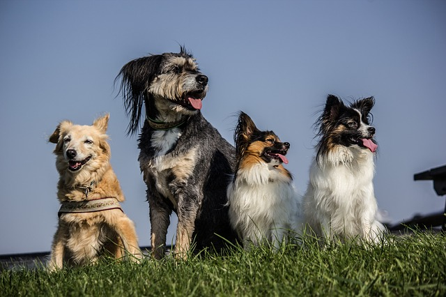 Dog Pack; various breeds...