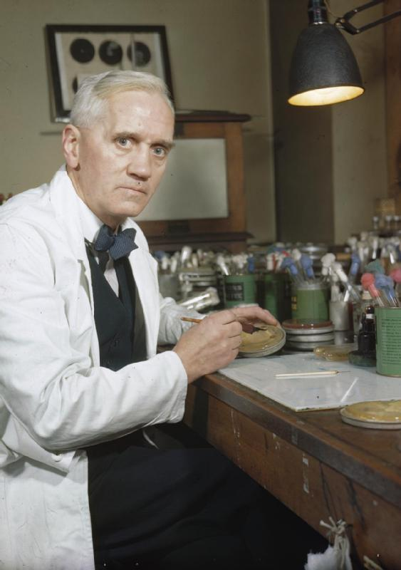Professor Alexander Fleming; in his laboratory at St Mary's,
