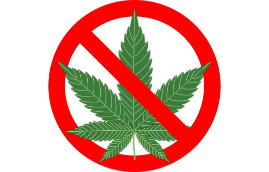 cannabis marijuana war on drugs