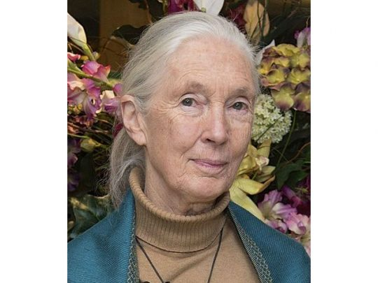 Jane Goodall's illustrious career continues to grow