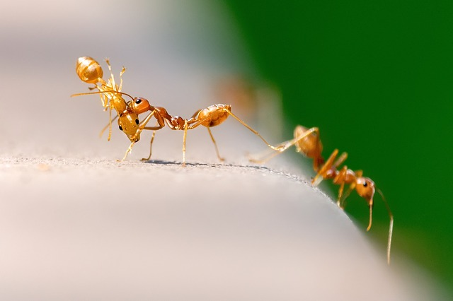 Red Ants Working Together Science And Technology