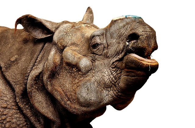 Plight of Rhinos a reminder that conservation is a serious matter