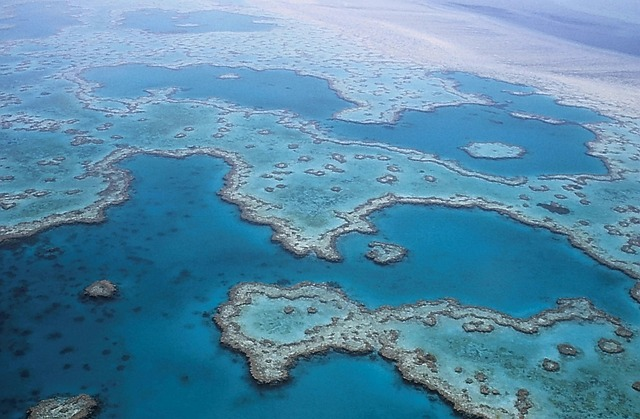 """We must not be complacent"" Scientists warn the GBR could be dead within the next 15 years"